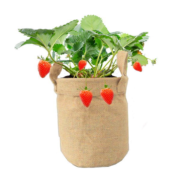 Herbs in Jutebag Strawberry (Jute Rond)
