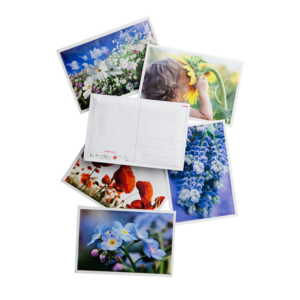 Blooming Postcards