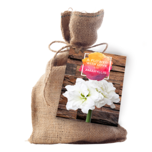 Amaryllis in Jute