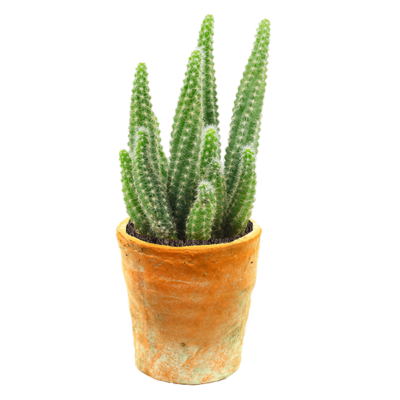 Urban Cactus – Pot (11×11) (Terracotta)